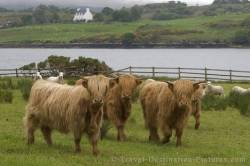 Scotlands Animals