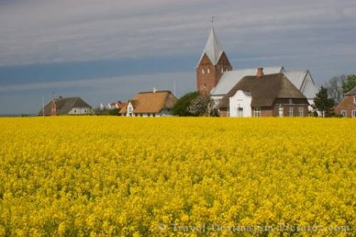 Picture Of A Field Of Canola