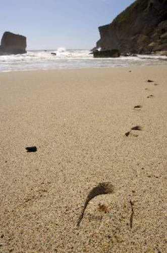 Picture Of Footprints In The Sand
