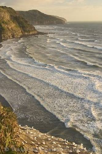 Muriwai Beach NZ